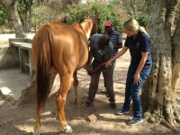 Dr Fran instructs a student on hoof care