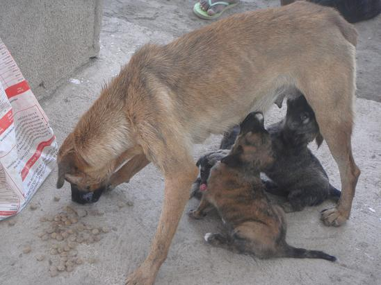 pups feed from lactating mother