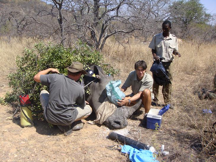 Keith cooling rhino horn implant