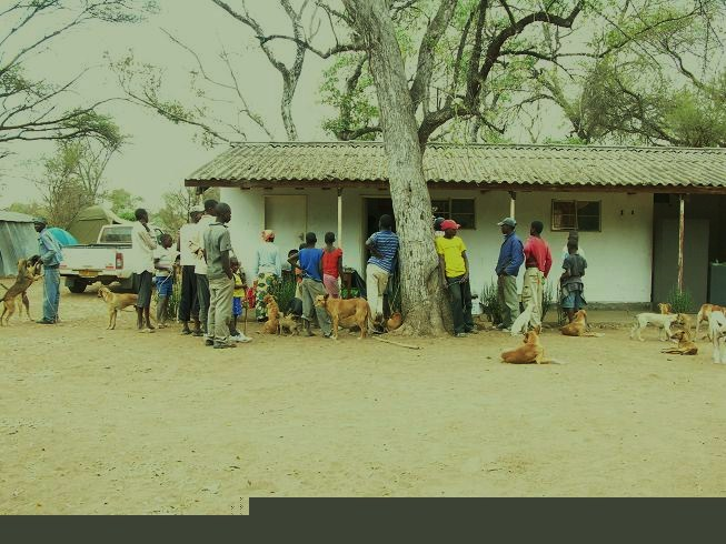 Villagers wait to have their dogs spayed